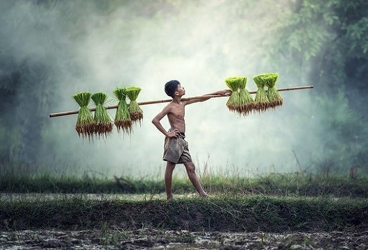 Effects of poverty - child labor