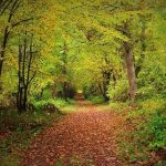 Ways to Conserve Natural Resources-forests